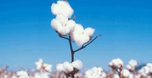 放网站 705x364 1 - 5 Types of Yarns that Commonly Used in Seamless Clothing - Custom Fitness Apparel Manufacturer